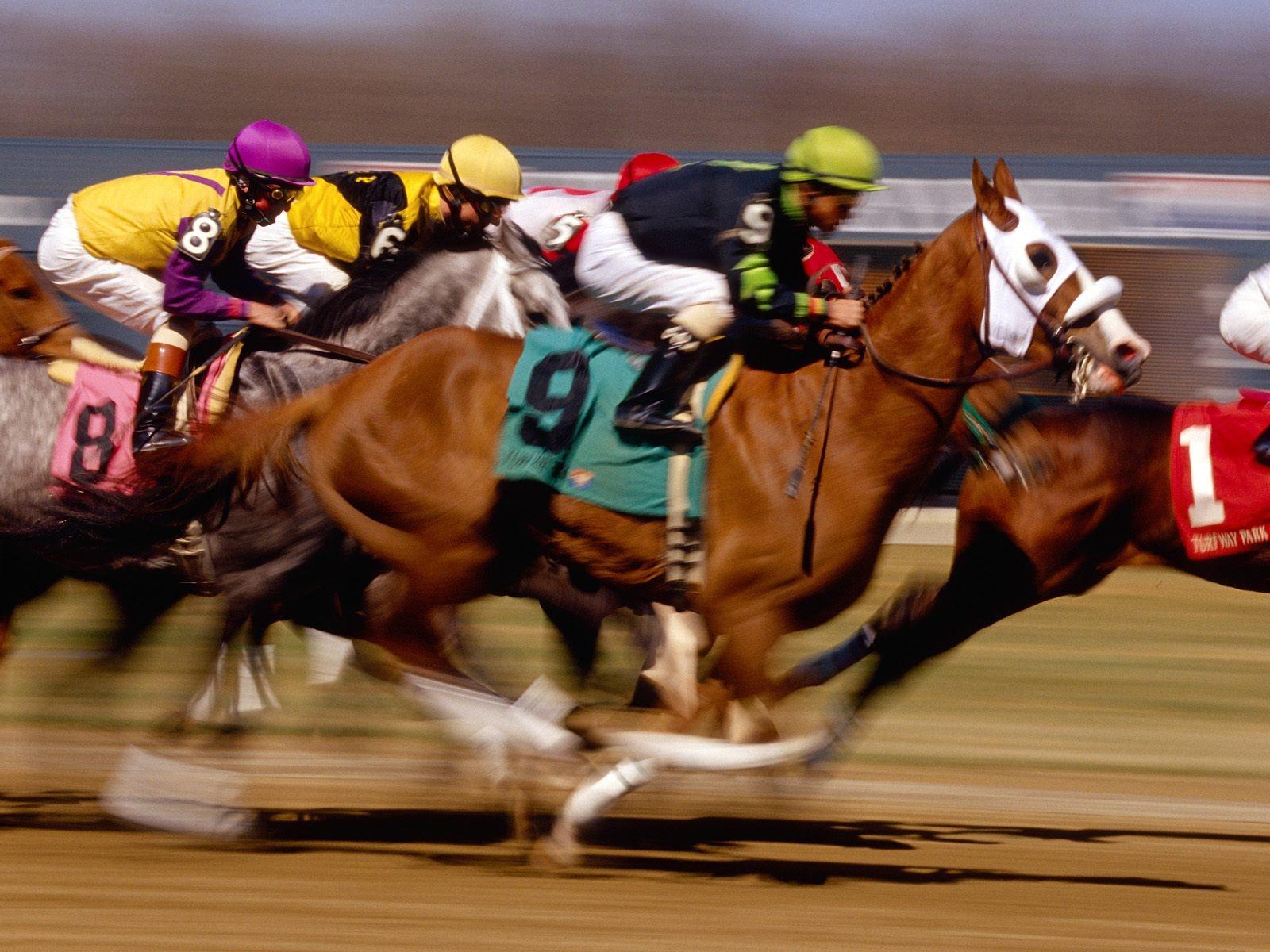 thoroughbred-horse-racing-2908